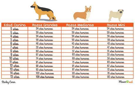tabla-edad-perros