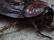 ¿Por difícil acabar cucarachas?