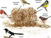 orden oculto pájaros