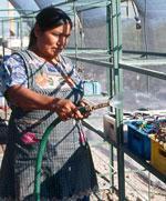 En la plataforma de acción de la ONU: La mujer, el medio ambiente y el desarrollo sostenible