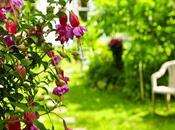 Mejora suelo jardín