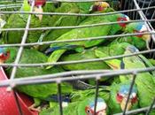 Continua campaña para combatir tráfico especies Luis Potosí