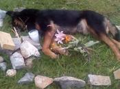 Juez Villa Zaragoza mata perro balazos