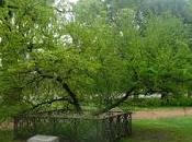 Arbol, árboles historia