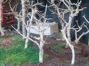 Diorama Acers Campestres grandes cambios para bosque