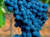 Leyenda Páramo, grandes vinos hacen historia