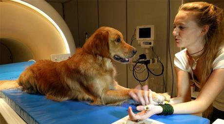 estudio demuestra que los perros entienden lo que decimos