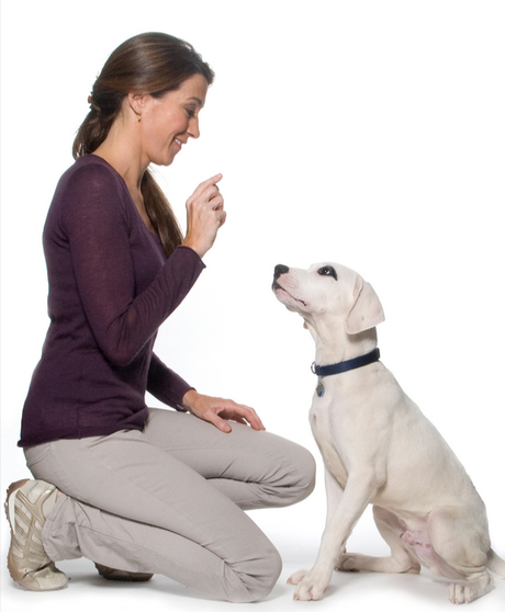 Un estudio demuestra que los perros entienden lo que decimos