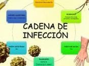 epidemia fiebre amarilla controlada para llegaron (todas) vacunas