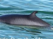 Québec (1): ballenas Tadoussac otras visitas interesantes norte ciudad