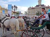 paseo ciudad serbia Novi