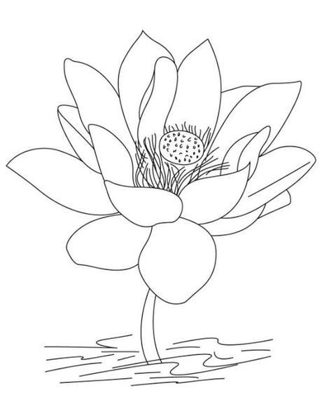 Worksheet. Flor de Loto  significado y 4 hojas para colorear  Paperblog