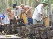 Sorprendentes imágenes apicultura vietnam amazing pictures beekeeping vietnam.