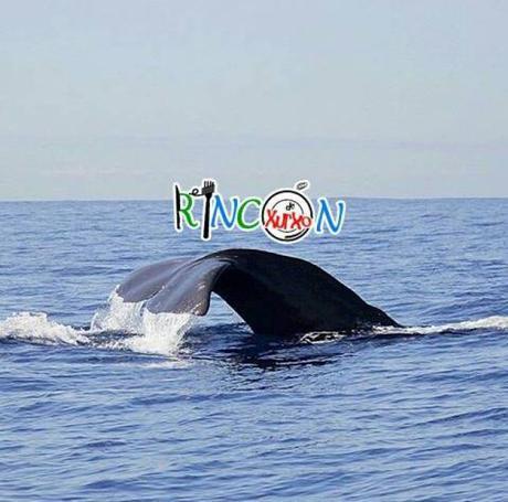 rota dos cetaceos