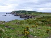 Islas Saltee, pequeño paraíso.