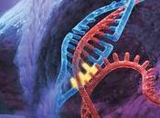 Editar, cortar pegar genoma. Técnica CRISPR