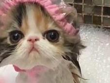 Simples Sencillos Trucos Para Bañar Gato Estrés.