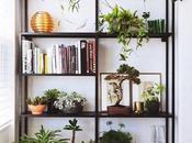Decorando plantas.