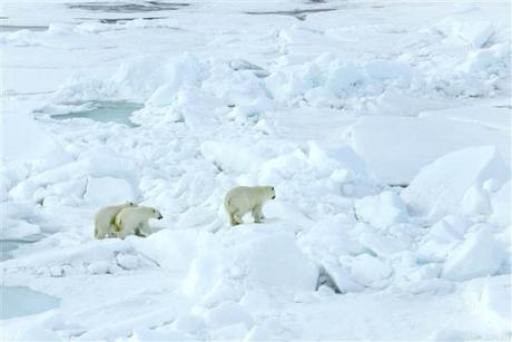 Image: Russian polar bears