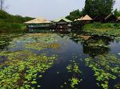 Kanchanaburi, viviendo Kwai