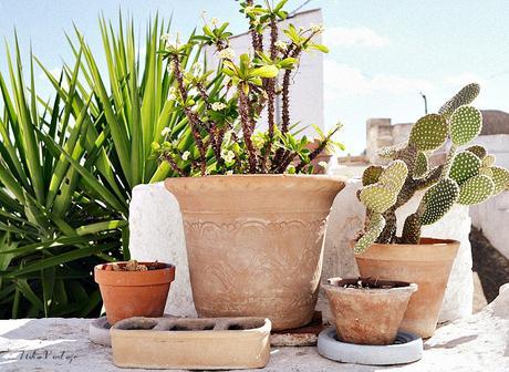 Composiciones con plantas para el exterior paperblog - Plantas para el exterior ...