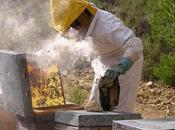 apicultura??? what beekeeping