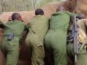 Increíble rescate elefante horrible herida atrapado trampa