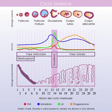 Sintomas de ovulacion dolorosa