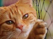 Piojos Gatos Como Identificarlos Exterminarlos