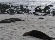 Galápagos (VI)