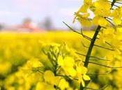 Excelentes floraciones apícolas alternativas excellent honey blooms alternatives.