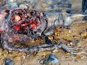 mito descubren cadáver #sirena (FOTOS)