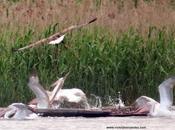 Resumen Viaje observación aves Bulgaria