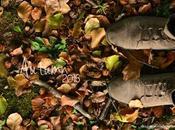 Actividades otoño-invierno.