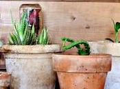 ¿decorar plantas tendencia llamada urban jungle?