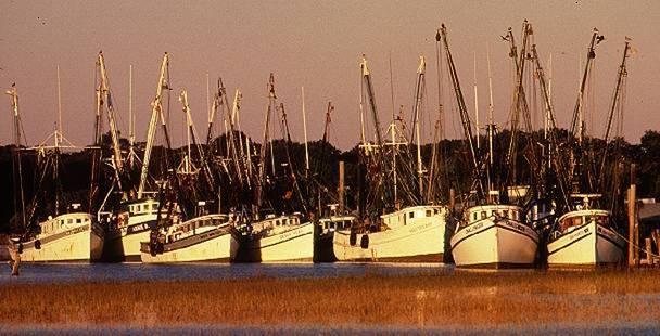 Barcos de camarones