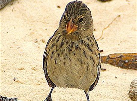 El pájaro bobo y el guano