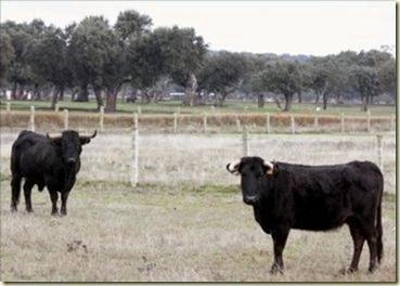 Madrazo_ganadería