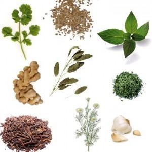 plantas medicinales 300x300 Los beneficios de las plantas