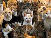 ¿Sabes Grupo Felinos Pertenecen Gatos? Decimos Todo