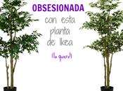 última obsesión: planta Fejka Ikea!