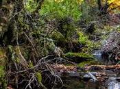 Hayedo Tejera Negra Parque Natural Sierra Norte Guadalajara