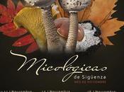 jornadas micológicas sigüenza