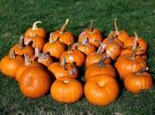 diary: pumpkins patch