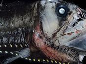 extrañas fascinantes criaturas profundo viven oscuridad constante