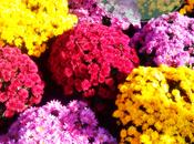foto semana: Colores.
