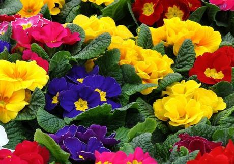 preparar las plantas de exterior para el invierno paperblog