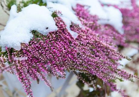 Preparar las plantas de exterior para el invierno paperblog for Plantas para invierno