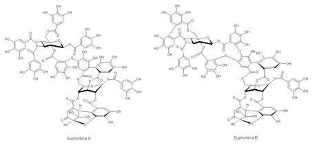 Antocianinas, un pHmetro de maceta