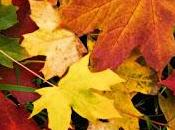 Días otoño